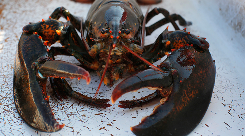 Demand for lobsters in China sends US exports soaring
