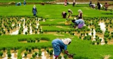 rice PRODUCTION NIGERIA