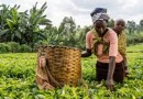 FAFINA receives $1 million to fund West and Southern African agri SMEs