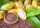 Ghana AND Cote D'Ivoire to announce floor price for cocoa on Oct 1
