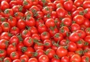 Tomato Growers Association of Nigeria (TOGAN) charge Federal Government to establish cottage processing plants