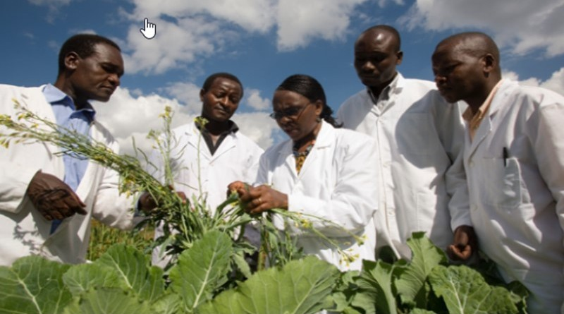 African Women in Agricultural Research and