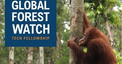 global forest watch tech fellowship