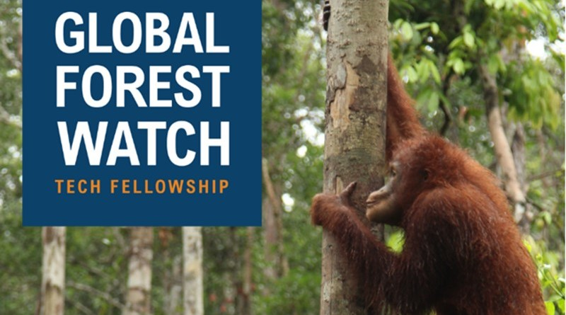 global forest watch tech fellowship