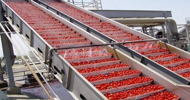 tomato food processing factory