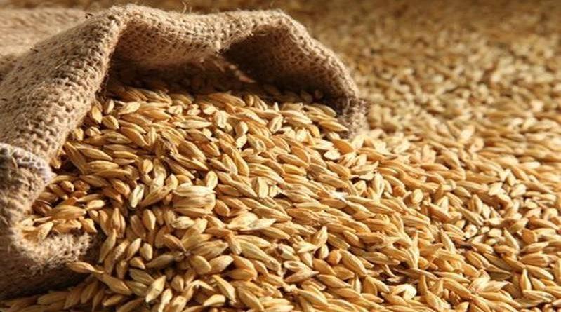 grains food wheat barley oats harvest